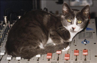Smokey, the sound engineer